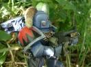 Warhammer 14