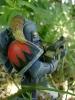 Warhammer 16